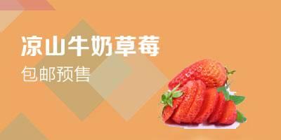 【領券立減10元】現摘涼山牛奶草莓兩盒裝(單盒20枚)新鮮奶油紅顏草莓四川冬草莓包郵預售